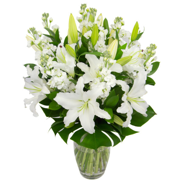 White Lilies in Auckland